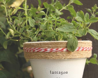 "4"" Tarragon Alley » Tarragon Herb Indoor and Outdoor Pot or Planter"