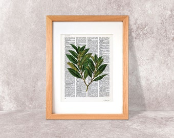 Laurel herb print-Kitchen wall art-Laurel on book page-herbs and spices print-laurel dictionary print-kitchen wall art-NATURA PICTA-NPDP064