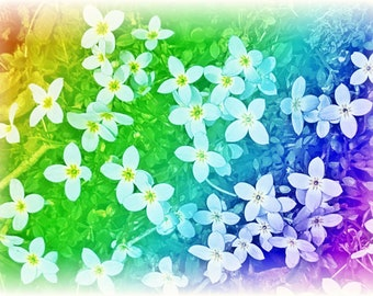 Rainbow flower art