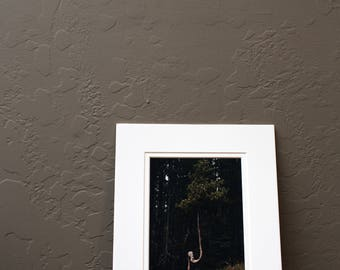 Crooked Tree Photographic Print, Matted
