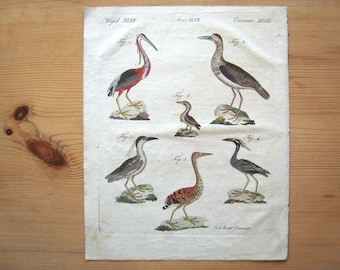 Antique Stork, Heron, Bird Bertuch Print original vintage engraving plate  dated 1808