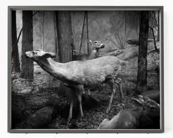 Deer Print, Deer Wall Art, Deer Poster, Forest Print, Forest Wall Art,  Woodland Animal Print, Large Printable, Black And White Deer Decor