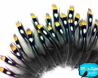Exotic Feathers, 10 Pieces - Small NATURAL GOLD Jungle Cock Eye Loose Feather : 405