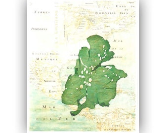 Original Collage Seaweed Pressing, reproduction old map Mexico gulf, Pressed seaweed Botanical Art, beach cottage decor, seaweed art 8x10