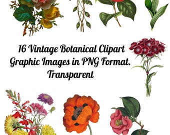 18 Botanical Flowers Images Clip Art Transparent PNG Files Instant Download