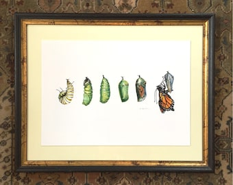 "Monarch Butterfly Art Print, Butterfly Illustration Archival Print Large Size 11.7"" x 16.5"""