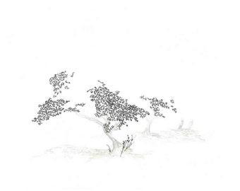 Tree, australian series