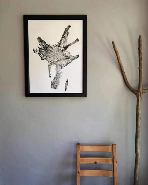 Real Tree Roots, Glacier National Park. Tree Ring Print, 18x24 inch, original woodblock, Tree root decor, Real tree roots, National parks