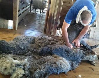 Stormy Caramel Grey Coloured Merino Fleece, Natural Colour Variations, Coated Fleece, Australian Merino, Raw Wool, 250 Gram Bags