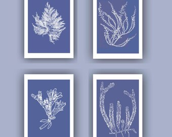 Ocean Pressed seaweed Print, Blue Sea grass  Set of 4 prints, Wall Decor,  Nautical art, Botanical Art Algae, beach cottage decor, SKU4sp
