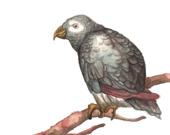"Watercolor Art Print ""African Grey Parrot on a Branch"" - Bird Art, Bird Print, Watercolor Animal, Watercolor Print, Animal Art, Wall Decor"