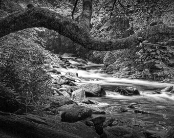 Mountain Stream, Great Smoky Mountains, National Park, Woodland River, Tennessee Landscape, Black and White, Fine Art, Landscape Photograph