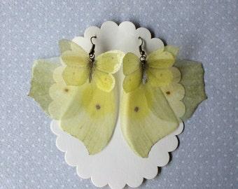 I Will Fly Away - Handmade Anteos Maerula Silk Organza Yellow Butterfly Wings Earrings
