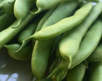Organic Green Bean Seeds