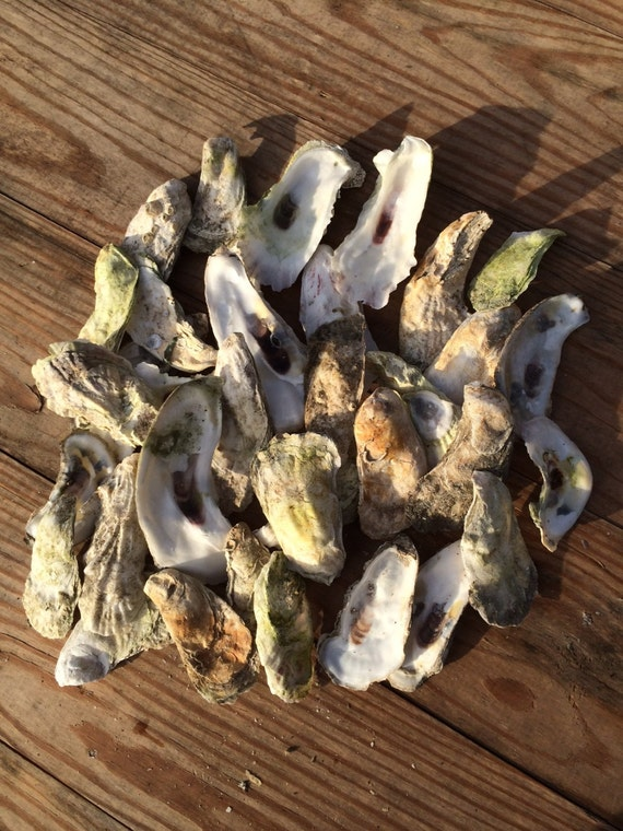 Arts And Crafts With Oyster Shells