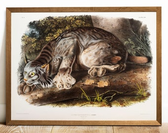 Lynx Print, Antique Animal Painting, Vintage Drawing Poster Wall Art Decor, Canada Lynx, vintage art, zoology gifts gift | C69