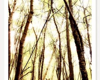 Through The Trees - Deer Photo - Animal Photography - Deer Decor - Wildlife Photo - Woodland Animal Print - Nature Photograph