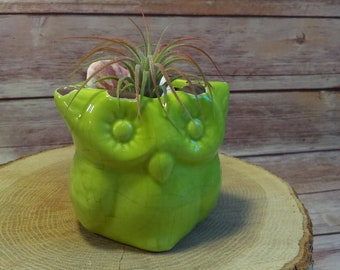 Green Owl Air Plant Terrarium