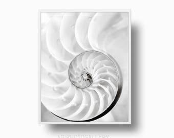 Nautilus Shell Print, Beach Sea Shell Print, shell photography black white, nautilus print, coastal Printable Download Beach Print
