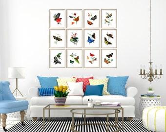 butterfly art, butterfly artwork, butterfly art print set, set of 12 butterfly prints, butterfly wall art, butterfly wall decor, 8x10, 11x14