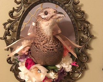Victorian Inspired Taxidermy Female Pheasant