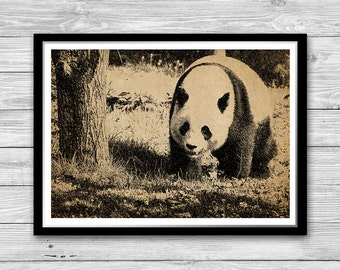 Panda illustration Wall Art, Panda Bear Art Print, Panda Decor, Panda Wall Art Wall Decor Poster Panda Antique Decoration Hand Drawn DIA30