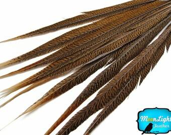 "Wholesale Pheasant Feathers , 50 Pieces - 14-16"" Natural Golden Pheasant Tail Wholesale Feathers (bulk) : 3288"