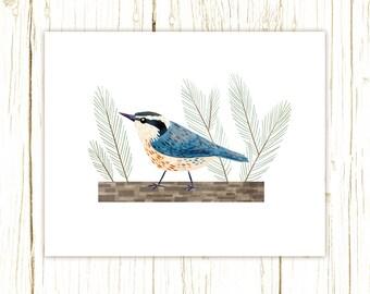 Red-Breasted Nuthatch Print -- bird art -- blue bird art 52 birds stephanie fizer coleman illustration