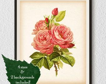 Rose art, Botanical print vintage, Rose wall art, Rose print, Antique botanical print, Rose illustration, Printable print, Digital print #16