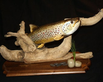 Open Gill Brown Trout
