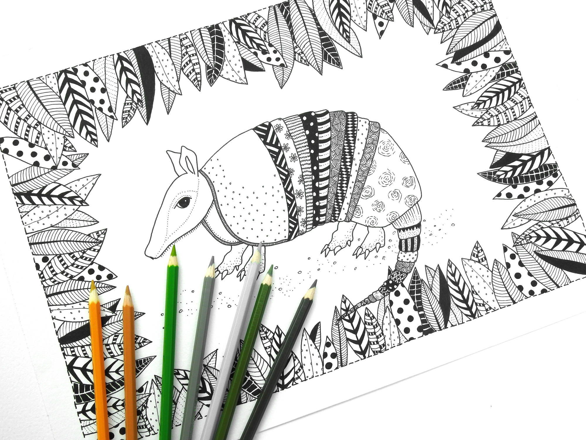 Armadillo Colouring Page Adult Colouring Page Adult