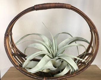 Vintage rattan wicker basket/ boho planter / boho planter / wicker planter basket