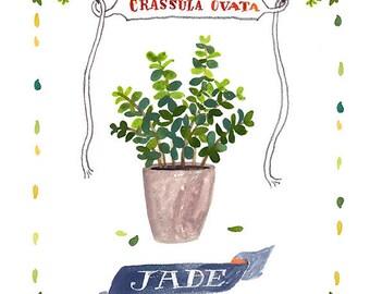 Jade Print, Jade Illustration, Succulent Illustration, Succulent Print, Jade Fine Art Print