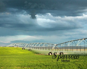 Agriculture Photography, Crops, Wheat, Storm Clouds