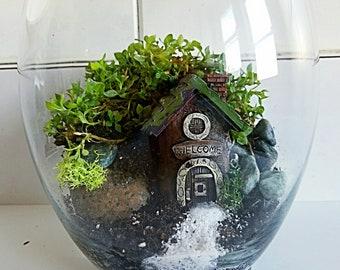 Succulent terrarium Fairy Home
