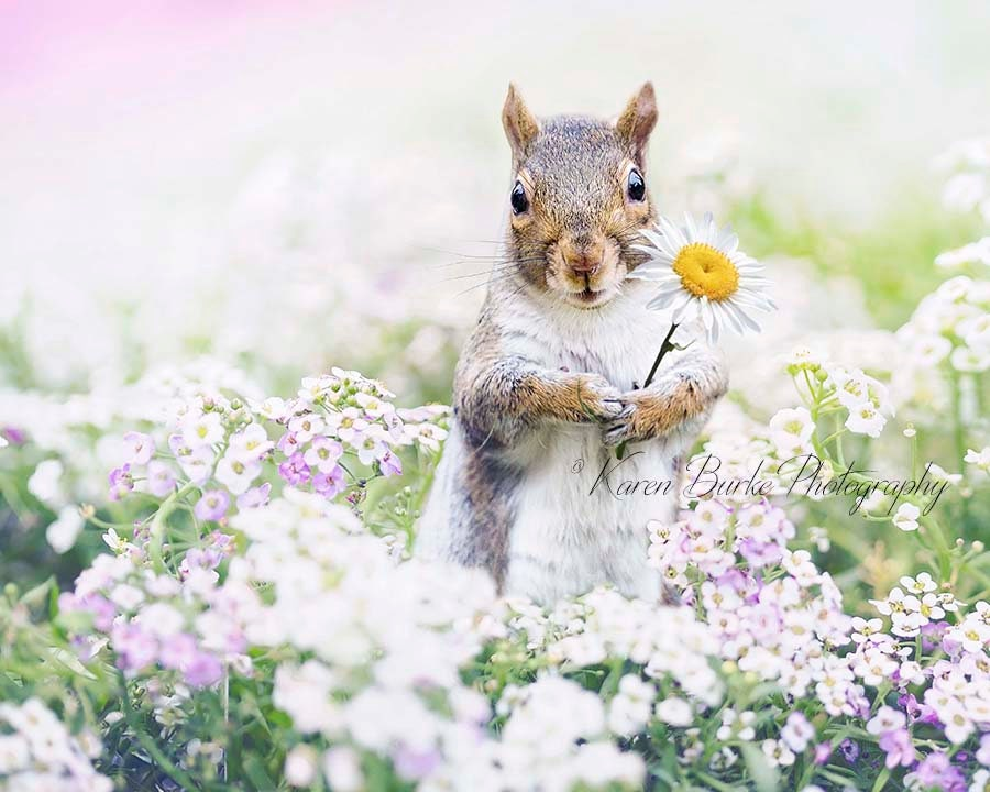 Squirrel Photograph Squirrel Print Whimsical Animals Flower