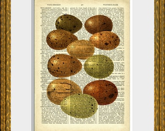 EGGS 01 - recycled old book page art print - upcycled antique dictionary page with retooled vintage egg illustration - vintage home decor