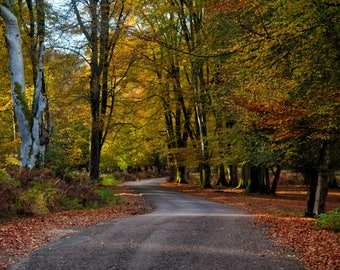 New Forest in the Autumn