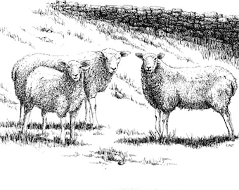 Sheep drawing,sheep art, black and white art, sheep print,farm animal art, animal prints, sheep in meadow drawing, sheep art