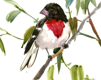 Rose Breasted Grosbeak, original watercolor painting, red, black bird wall art, bird lover painting, one of a kind