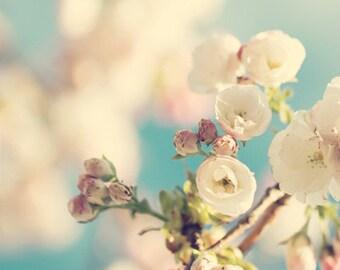 Cherry Blossom Photo Print - Flower Photography, tree blossoms, spring gift, wall decor, fine art print, botanical art, nursery decor, aqua