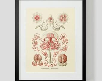 Vintage Ocean Life Jellyfish Print 4