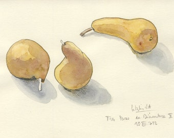 """Pears 2/4 Watercolor drawing, ORIGINAL pears drawing. Pencil and watercolor. 6""""x 8"""", Golden pears still life art by Catalina"""