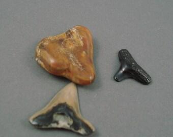 Destash Real Shark Teeth