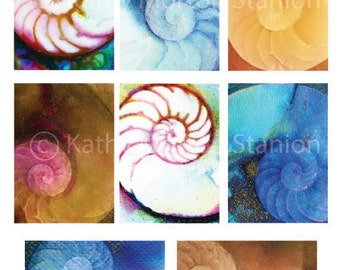 8 Colorful Nautilus Shells, Sea Ocean Clip Art, INSTANT DOWNLOAD Printable Sea Shell, sea life Art by Kathy Morton Stanion EBSQ
