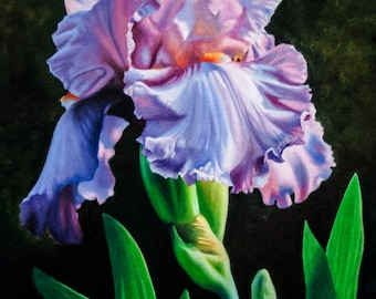 Iris Flower Art Print ~ Floral Painting ~ Reproduction of Original Oil Painting ~ FREE SHIPPING