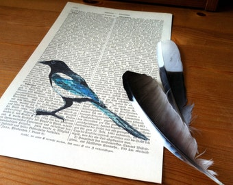 Magpie Small  Art Print on Antique 1896 Dictionary Book Page