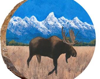 Tetons Moose Walking in Dried Grass - DAE344