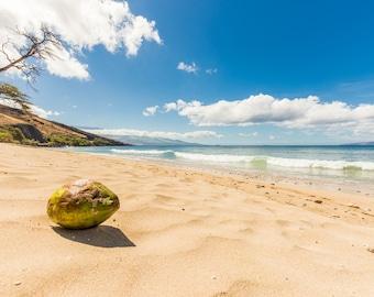 Coconut on Hawaiian Beach Surf Photography Decor Print, Ocean, Hawaii, Maui, Oahu, Kauai, Tropical, Hawaiian Island, California, Florida