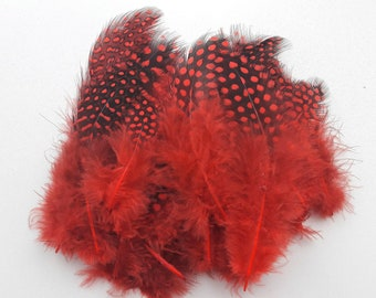 50 red 2-12cm Guinea fowl feathers